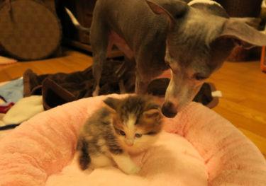 ペットの遺伝子検査「Pontely」で愛犬・愛猫の健康を考える